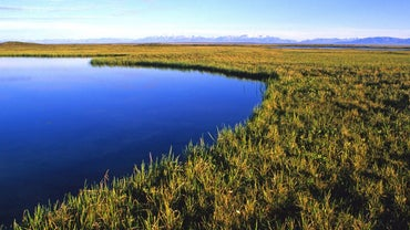 What Are Some Basic Facts About Coastal Plains That Kids Should Know?
