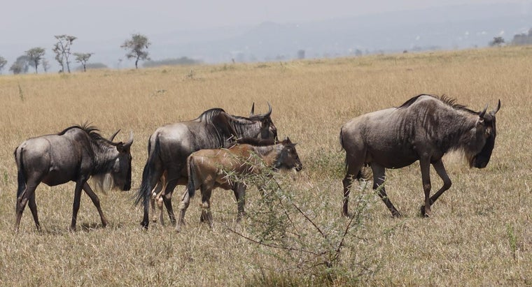 What Are Some Different Types of Safaris in Tanzania?
