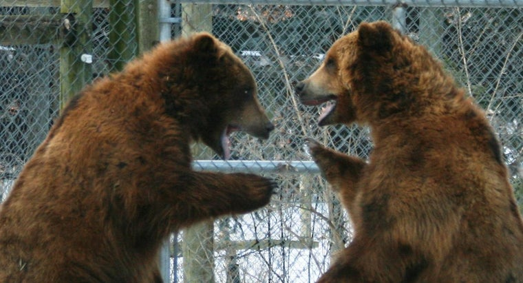 What Are Some Facts to Teach Kids About Brown Bears?