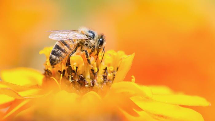 What Do You Do in the Event of a Bee Sting?