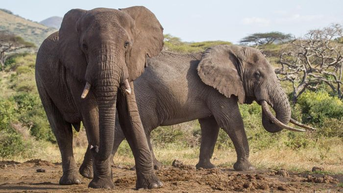 Which Types of Wildlife Animals Are Endangered?