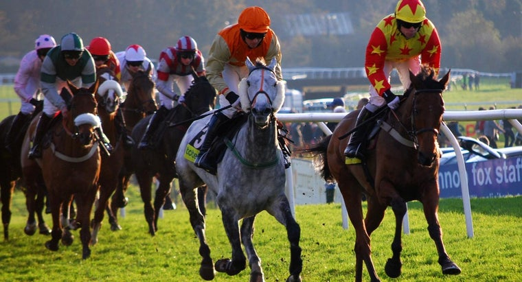Who Are Some Famous Racehorses?