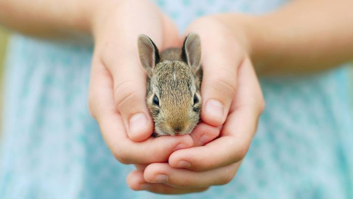 What are some rabbit facts appropriate for kids?