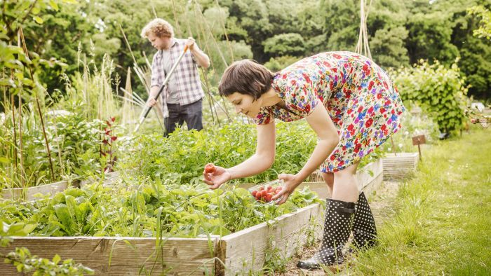 What Vegetables Are Easy to Grow in Your Garden?