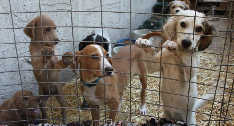 Do Animal Shelters Have Pictures of the Dogs for Adoption Available?
