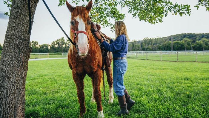 How Much Does It Generally Cost to Buy and Keep a Horse?