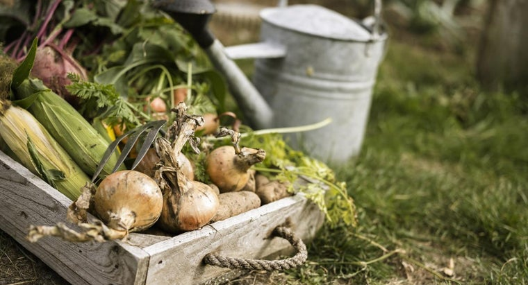 What Are Some Ways to Prevent Wireworm Damage to Vegetables?