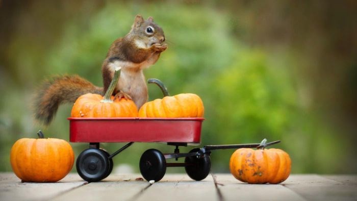 How Can You Stop Squirrels From Eating Pumpkins?