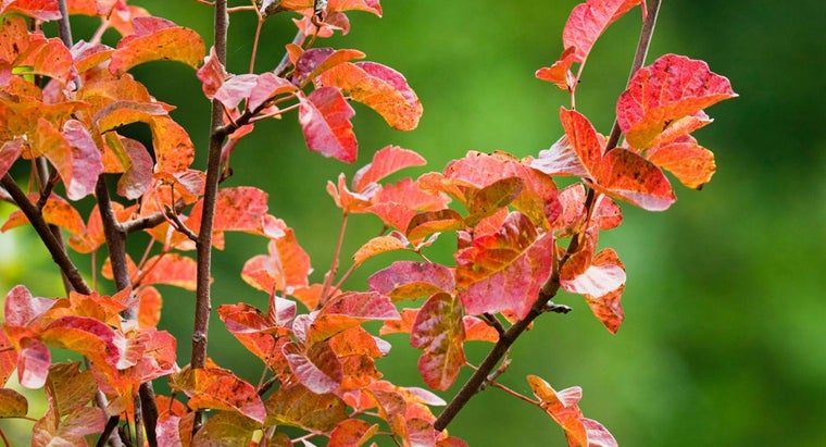 What Is the Best Treatment for Poison Oak?