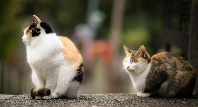 What Are the Symptoms of Cat Health Issues?