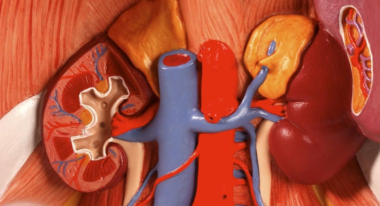 What Is the Meaning of Nephrology?